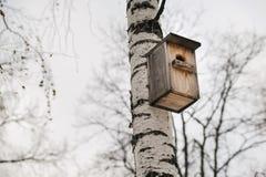 Caída de madera de la pajarera en árbol de abedul Foto de archivo