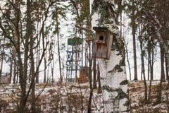 Caída de madera de la pajarera en árbol de abedul Imagen de archivo