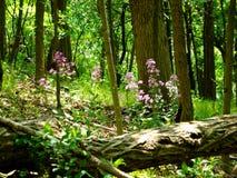 Caída del árbol del suelo del bosque Imagen de archivo libre de regalías