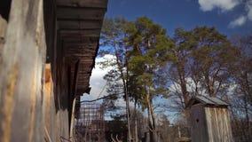 Caída del árbol a la tierra usando un sistema de la cuerda metrajes