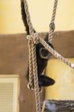Caída del bebé del mono en cuerda Foto de archivo libre de regalías
