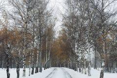 Caída del invierno Foto de archivo