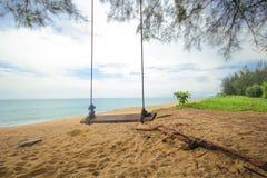 Caída del oscilación del árbol de coco Imágenes de archivo libres de regalías