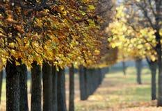 Caída del otoño Foto de archivo