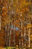 Caída del otoño Fotos de archivo libres de regalías
