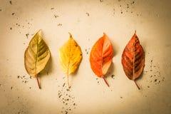 Caída del otoño - hojas coloridas en el fondo de piedra Fotografía de archivo libre de regalías