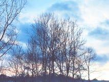 Caída del ` t de Doesn lejos del árbol Fotos de archivo libres de regalías