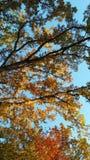 Caída del top del árbol Imágenes de archivo libres de regalías
