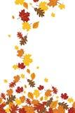 Caída descendente brillante Autumn Leaves Vertical Illustration 1 Fotografía de archivo libre de regalías