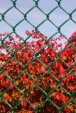 Caída detrás de la cerca Fotografía de archivo