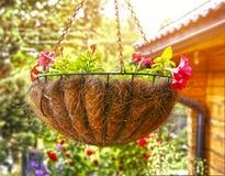 Caída elegante de la cesta de la flor en jardín del verano Foto de archivo libre de regalías