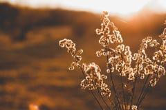 Caída en Dinamarca, puesta del sol en el prado foto de archivo libre de regalías
