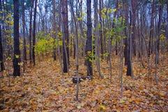 Caída en el bosque foto de archivo