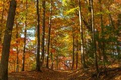 Caída en el bosque Foto de archivo libre de regalías