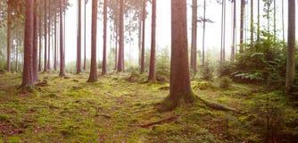 Caída en el bosque Fotografía de archivo libre de regalías