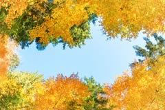Caída en el bosque con los árboles anaranjados Foto de archivo libre de regalías