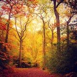 Caída en el bosque de haya Foto de archivo libre de regalías