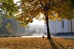 Caída en el Central Park foto de archivo libre de regalías
