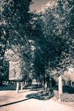 Caída en el jardín de Schönbrunn en Viena Imágenes de archivo libres de regalías
