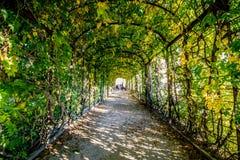 Caída en el jardín de Schönbrunn en Viena Fotografía de archivo