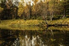 Caída en el río Imágenes de archivo libres de regalías