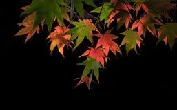 Caída en Kyoto Imagen de archivo libre de regalías