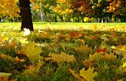 Caída en parque Fotografía de archivo libre de regalías