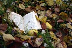 Caída en un jardín imagen de archivo libre de regalías