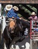 ¡Caída en vaquero! Foto de archivo