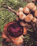 Caída floral Imagen de archivo
