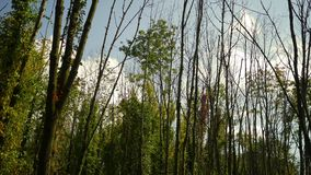 Caída Forest Series - Timelapse de las nubes que ruedan sobre bosque hermoso del otoño metrajes