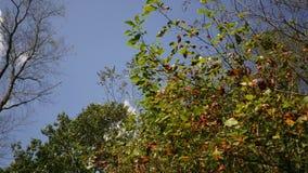 Caída Forest Series - un árbol parcialmente que da vuelta anaranjado durante caída temprana metrajes