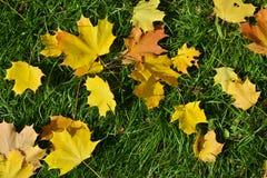 Caída hermosa de la hoja del otoño Fotos de archivo