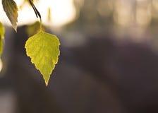 Caída hermosa. Hoja del árbol Fotos de archivo libres de regalías
