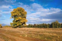 Caída, hojas del amarillo Fotos de archivo