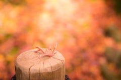 Caída roja de la hoja de arce en el polo de madera Imágenes de archivo libres de regalías