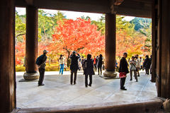 Caída roja del otoño del arce japonés, árbol del momiji en Kyoto Japón Imagenes de archivo