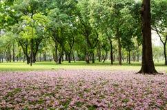 Caída rosada del flor en hierba verde Imagenes de archivo