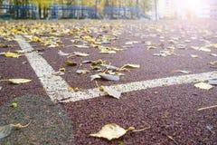 Caídas, as folhas encontram-se na superfície artificial da terra de esportes com marcações, na perspectiva dos suportes Imagem de Stock
