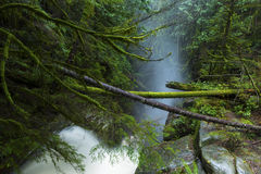 Caídas de Cypress Fotografía de archivo