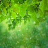 Caídas de la lluvia Fotografía de archivo