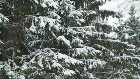 Caídas de la nieve en las ramas de árbol almacen de metraje de vídeo