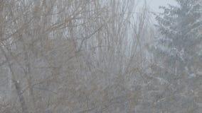 Caídas de las nevadas fuertes, nevada en el fondo de árboles almacen de video