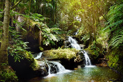 Caídas de Onomea situadas en el jardín botánico tropical de Hawaii en la isla grande de Hawaii imagen de archivo