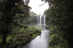 Caídas de Whangarei, Nueva Zelandia imagen de archivo