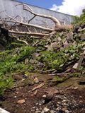 Caídas del árbol Fotos de archivo libres de regalías