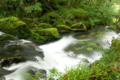 Caídas del agua de río Fotos de archivo libres de regalías