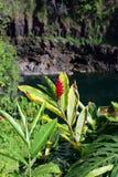 Caídas del arco iris, Isalnd grande, Hawaii Imagen de archivo libre de regalías