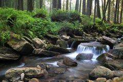 Caídas del bosque y rocas cubiertas de musgo. Fotografía de archivo