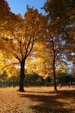 Caídas del otoño Fotografía de archivo